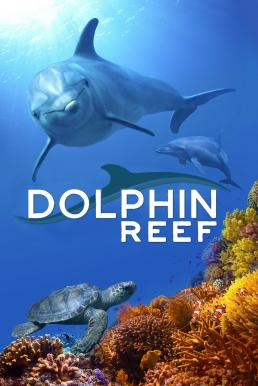 Dolphin Reef (2020) บรรยายไทย