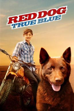 Red Dog True Blue (2016) เพื่อนซี้หัวใจหยุดโลก 2